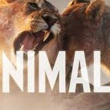 DJ Sanjoy - Animal DJ Sanjoy Cover Art