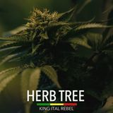 King Ital Rebel - Herb Tree Cover Art