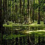 Osvid - Nature Nature Swamp Cover Art