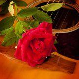 Osvid - Rosa Lee's Rose Cover Art