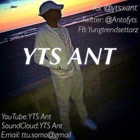 YTS Ant