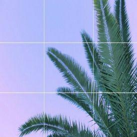 Palm Trees (feat. Emilia Ali)