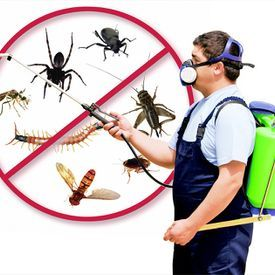 Bed Bug Exterminator Hawaii Bed Bug Services Uploaded By Bed Bug