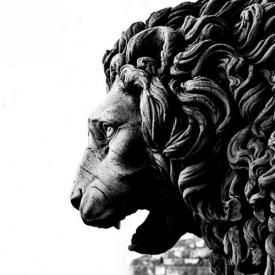 Lion Harted