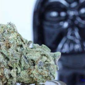 Lord Vader Kush (Instrumental)
