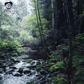 Meet Me Where the River Turns Grey