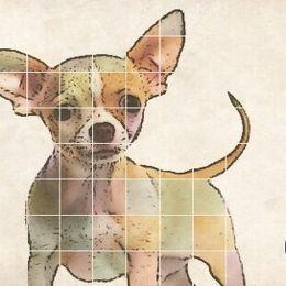 Kelo - Chihuahua Cover Art