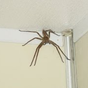 5 Terrifying Spider Horror Stories / Encounters by Mr